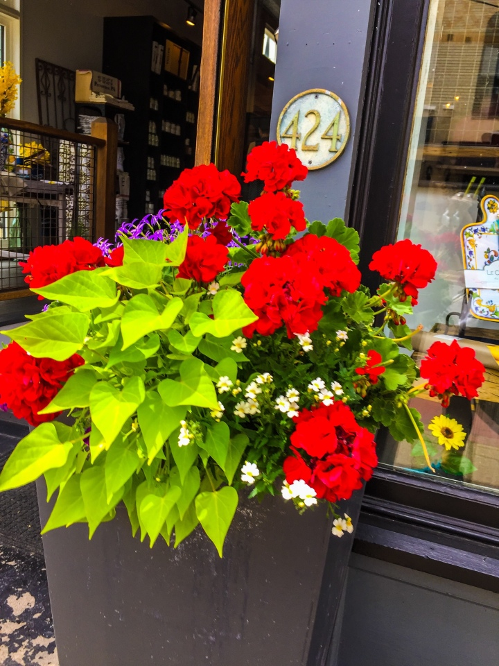 Potted flowers at storefront