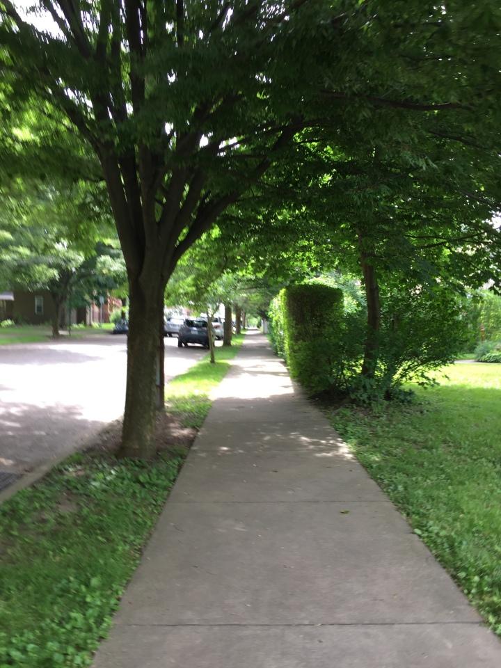 Shaded street